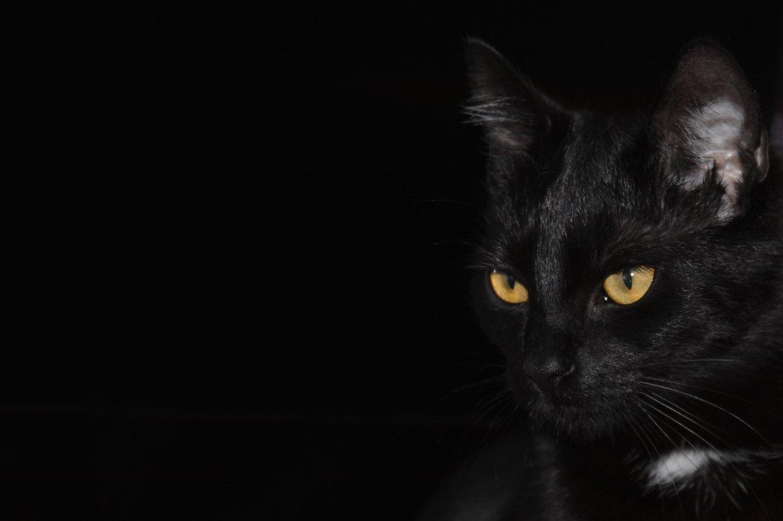 cat vision