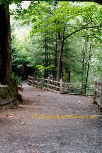 tumwater-falls-walking-path