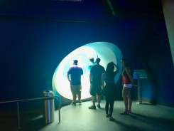 Frost Science Museum - 1 (13)