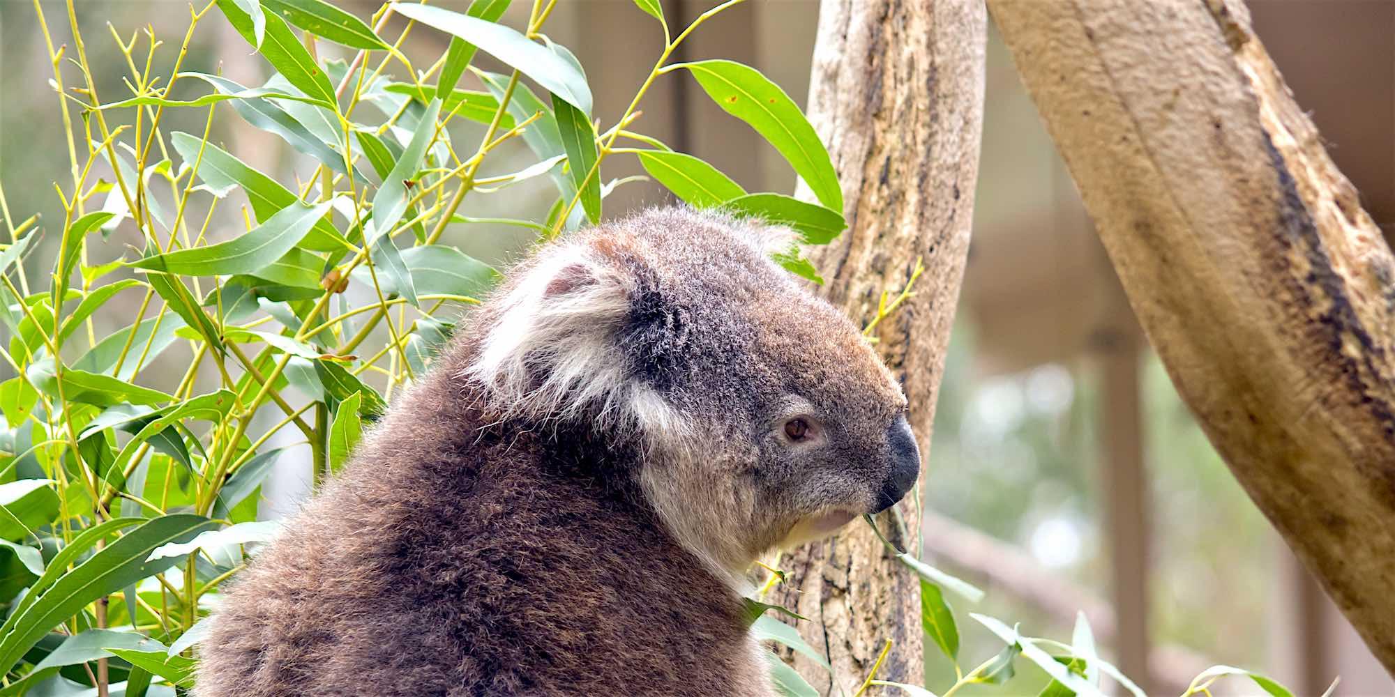 Healesville Wildlife Sanctuary Tour from Melbourne