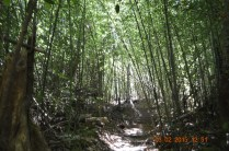 The bamboo forest helped to keep the noise out as well as the dust while allowing through the breeze. Smart move Jose!