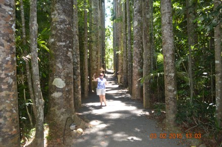 Kauri Avenue. The trees here are about 80 years old and apparently live for roughly 1000 years. So these trees are considered to be very young! Unlike the old birthday biddy posing with the trees!