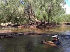 Cooling off in the Normanby River at Kalpower Crossing