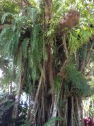 Tree ferns!