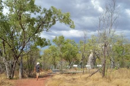 The Douglas Tree