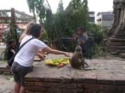 Monkey festival Lopburi