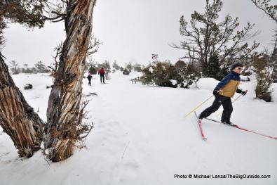 Upper terraces ski trail, Mammoth Hot Springs.