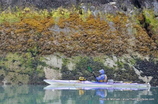 West Arm, Glacier Bay.
