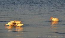 White ibises at Tiger Key.