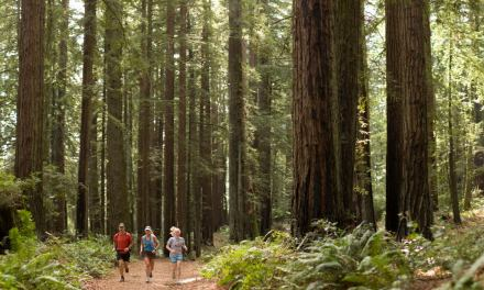 Trail Running Across Marin: Four Days, 42 Miles, Inn-to-Inn