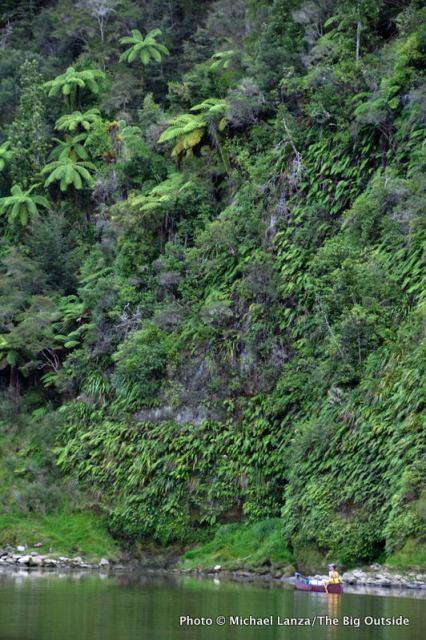 Whanganui River, Whakahoro to Pipiriki, Whanganui River Journey, Whanganui National Park.
