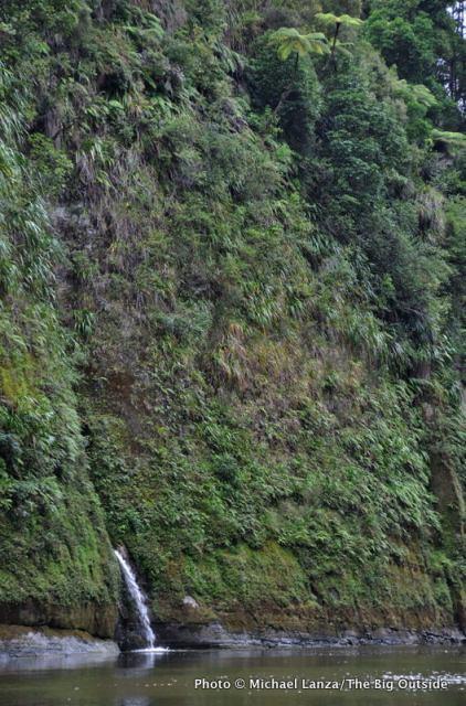 Whanganui River near Pipiriki, Whakahoro to Pipiriki, Whanganui River Journey, Whanganui National Park.