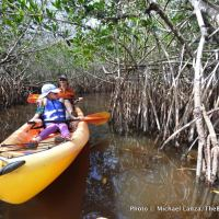Mangrove tunnel, East River, Fakahatchee Strand Preserve State Park, Florida.