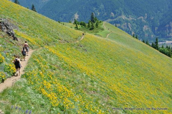 Dog Mountain, Columbia Gorge, WA.