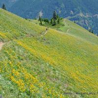 Hikers on Dog Mountain, Columbia Gorge, Washington.
