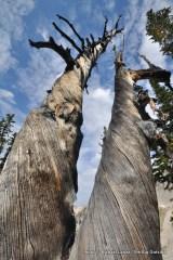 Trees above Arrowhead Lake.