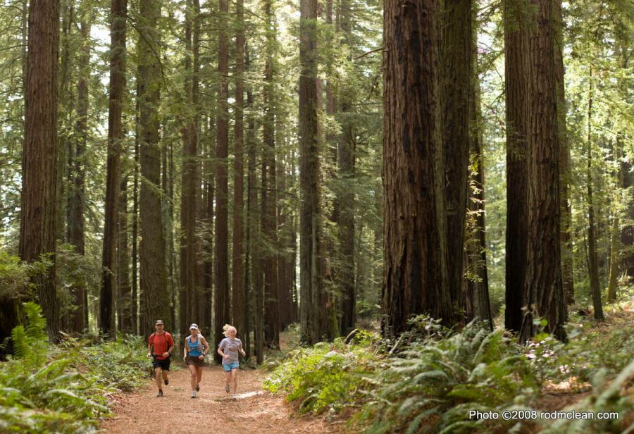 Trail runners on the Bolinas Ridge Fire Road in Marin County, California.