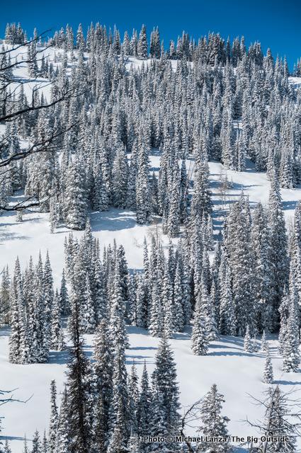 A slope near Baldy Knoll.