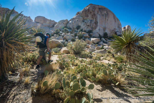 Hiker in Joshua Tree National Park, shot with an ultra-wide zoom lens.