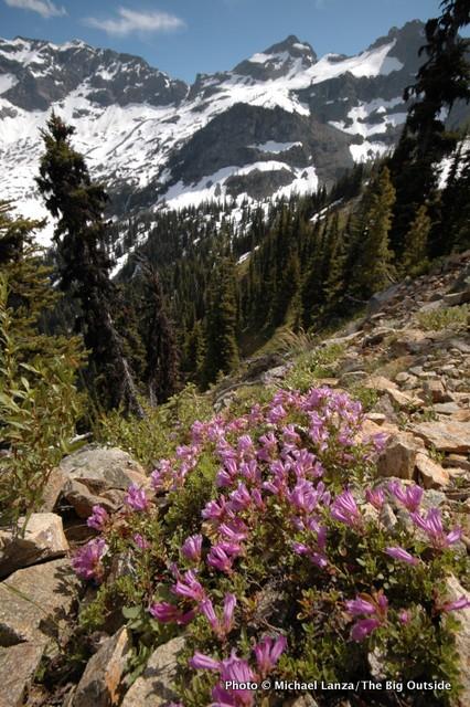 Heather Pass-Maple Pass Loop, North Cascades National Park, Washington.