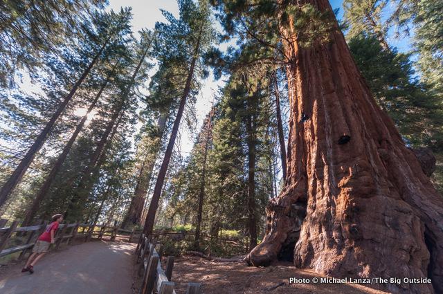 Grant Grove, Kings Canyon National Park.