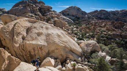 One Photo, One Story: Exploring Joshua Tree National Park