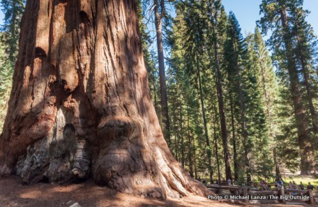 Tourists and General Sherman Tree, Sequoia National Park.