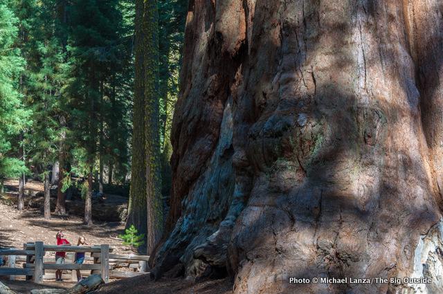 General Sherman Tree, Sequoia National Park.