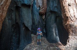 A young girl amid giant sequoias in Redwood Meadow Grove, Sequoia National Park.