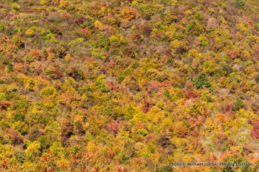 Fall color in Pisgah National Forest.