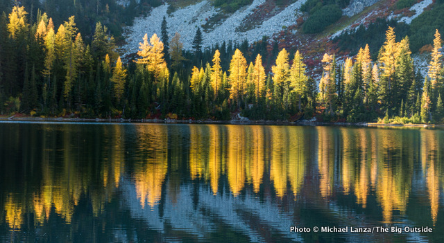 Larch trees showing fall color at Rainbow Lake, North Cascades National Park Complex.