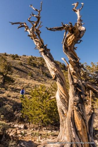 On the Telescope Peak Trail.
