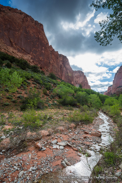 Taylor Creek Canyon, in Zion's Kolob Canyons.