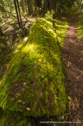 Moss on log, Fisher Creek Trail, North Cascades N.P.