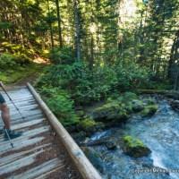 Along the Thunder Creek Trail, North Cascades N.P.
