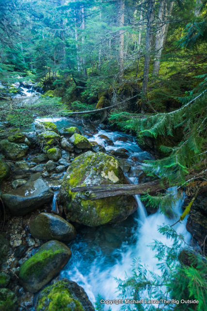 Along the Thunder Creek Trail, North Cascades N.P.