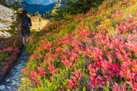 Along Park Creek Trail, North Cascades N.P.