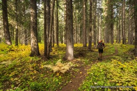 Upper Bridge Creek Trail, North Cascades N.P.