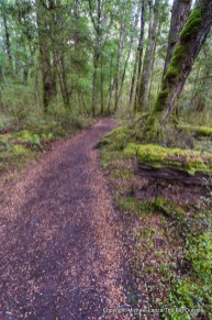 Kepler Track, Fiordland National Park, New Zealand.