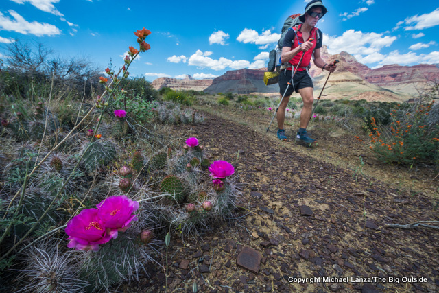 Wildflowers and a backpacker along the Tonto Trail, Grand Canyon.