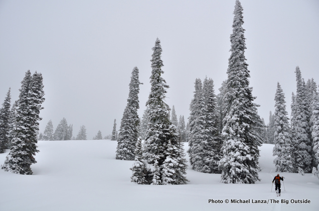 Backcountry skiing into a quiet forest of ponderosa pines in Idaho.