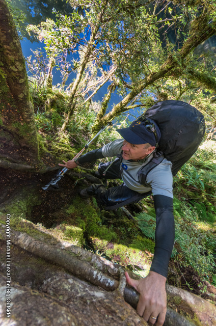"A hiker ascending a ""root ladder"" on the Dusky Track in New Zealand's Fiordland National Park."