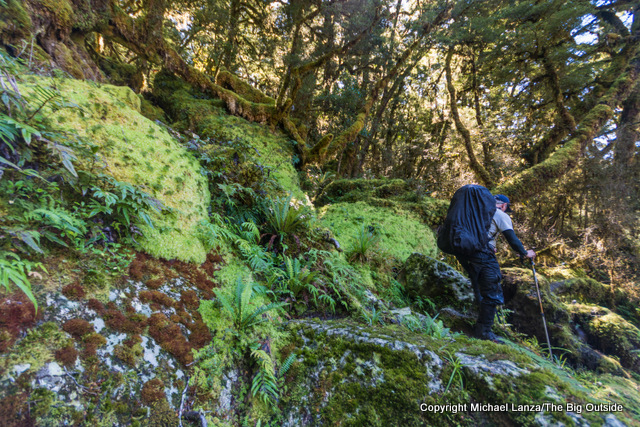 A trekker hiking the Dusky Track in the Seaforth River Valley in New Zealand's Fiordland National Park.