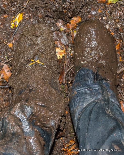 A hiker's muddy boots on the Dusky Track, Fiordland National Park, New Zealand.