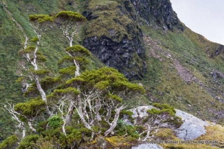 Along the Dusky Track near Centre Pass, Fiordland National Park, New Zealand.