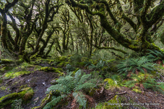 The Warren Burn forest on the Dusky Track in New Zealand's Fiordland National Park.