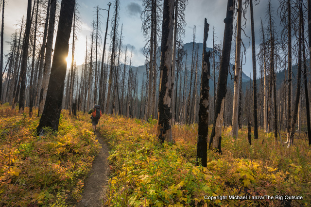 Backpackers hiking through a burned forest in Glacier National Park.