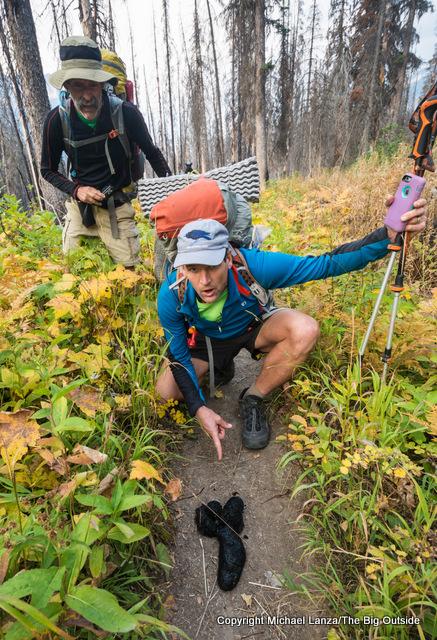 Backpackers admiring a big bear poop in Glacier National Park.