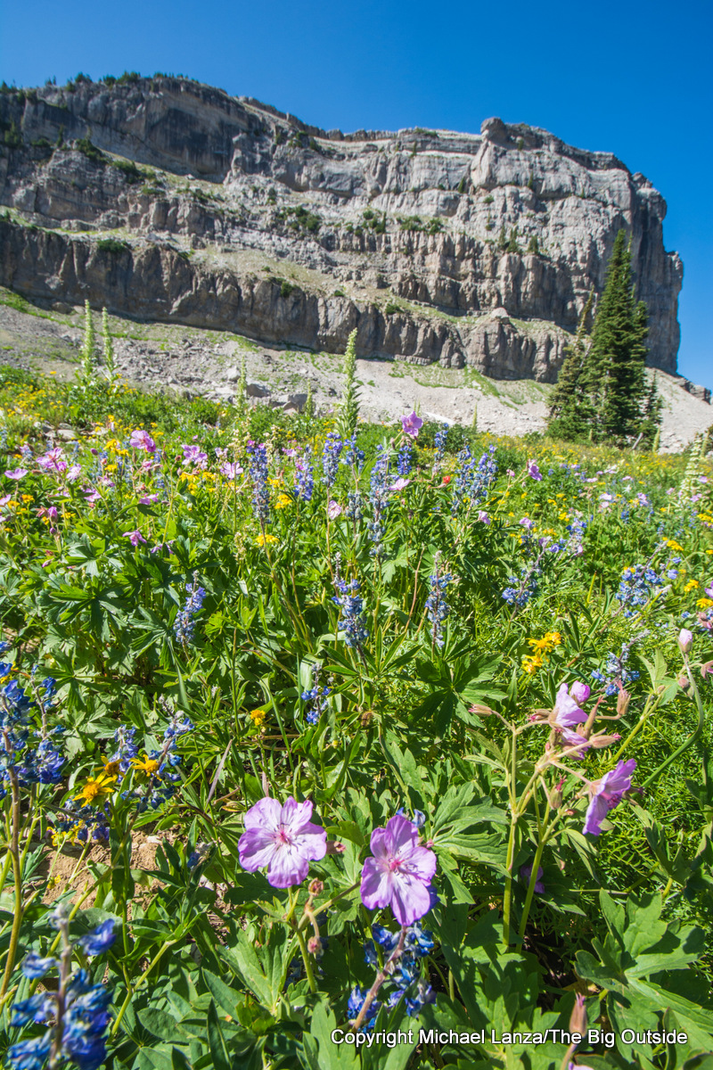 Wildflowers along the Teton Crest Trail on Death Canyon Shelf.