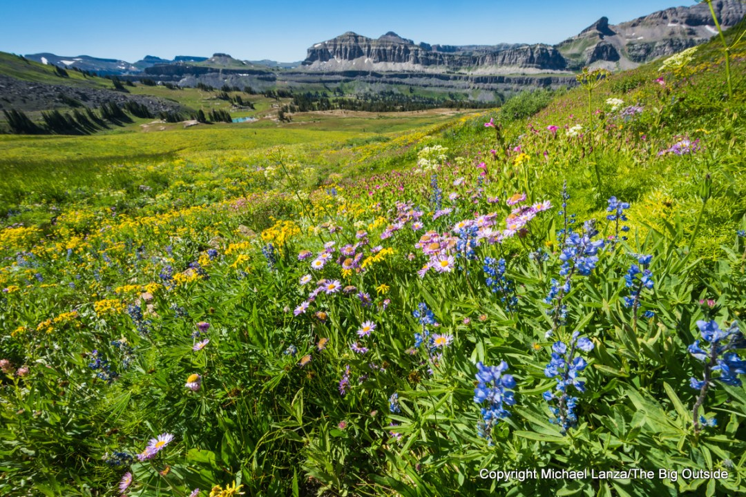 Wildflowers along the Teton Crest Trail, Grand Teton National Park.